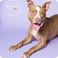 Adopt A Pet :: Dozer - Apache Junction, AZ