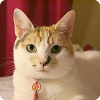 Domestic Shorthair Cat for adoption in Santa Ana, California - Moonflower