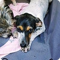 Adopt A Pet :: Bernice - Goodlettsville, TN