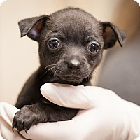 Adopt A Pet :: Jolly - Dallas, TX