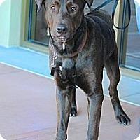 Adopt A Pet :: Daniel - Scottsdale, AZ