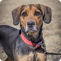 Adopt A Pet :: Katie - Cheyenne, WY
