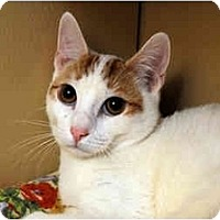 Adopt A Pet :: Fluffernutter - Farmingdale, NY