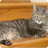 Adopt A Pet :: Ross - Colmar, PA
