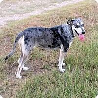 Adopt A Pet :: Zena - Waller, TX