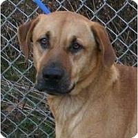 Adopt A Pet :: Bo - Toronto/Etobicoke/GTA, ON