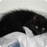 Adopt A Pet :: Pepper - Davis, CA