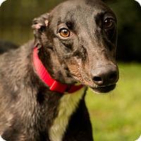 Adopt A Pet :: PJ Out Dash Me