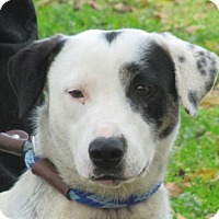 Adopt A Pet :: Ziggy - Turlock, CA