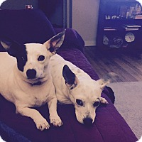 Adopt A Pet :: Ellie and Ava - Homewood, AL