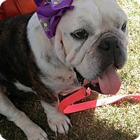 Adopt A Pet :: Myrtle - Houston, TX
