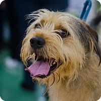 Adopt A Pet :: Bowser - Sparta, NJ