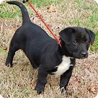 Adopt A Pet :: Lola (10 lb) - SUSSEX, NJ