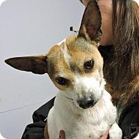 Adopt A Pet :: Roo - Livonia, MI