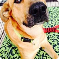 Adopt A Pet :: Rey - Little Elm, TX