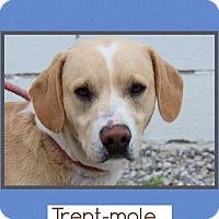 Adopt A Pet :: Trent - Plainfield, CT