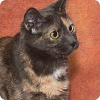 Adopt A Pet :: Sparkles - Elmwood Park, NJ