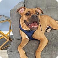 Adopt A Pet :: Holly Robinson Peete - Jersey City, NJ