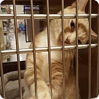 Adopt A Pet :: Mango - Jackson, NJ