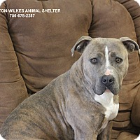 Adopt A Pet :: Zena - Washington, GA