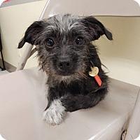 Adopt A Pet :: Billie Jean - Studio City, CA