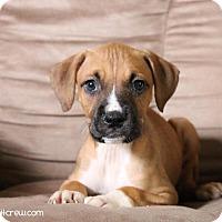 Adopt A Pet :: Lima - Toledo, OH