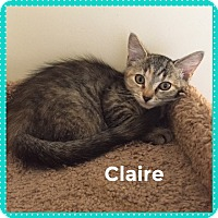Adopt A Pet :: Claire - Greensburg, PA