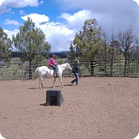 Pony - of America for adoption in Bayfield, Colorado - Calamity Jane