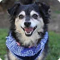 Terrier (Unknown Type, Small)/Spaniel (Unknown Type) Mix Dog for adoption in Monrovia, California - Daisy