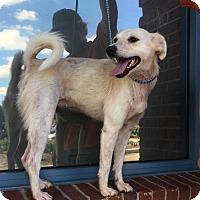 Adopt A Pet :: Jodie - Murfreesboro, NC
