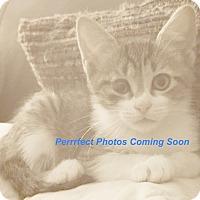 Adopt A Pet :: Crook - Georgetown, TX
