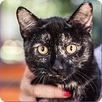 Adopt A Pet :: Fume - St Helena, CA
