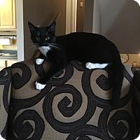Adopt A Pet :: Maria - Cincinnati, OH