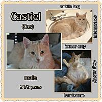 Adopt A Pet :: Castiel - Richmond, CA