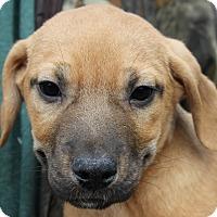 Adopt A Pet :: Jax - Colonial Heights, VA