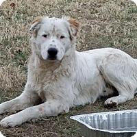 Adopt A Pet :: Tex - Springfield, VA