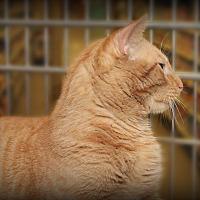 Adopt A Pet :: Jack - Springfield, PA