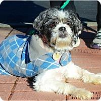Adopt A Pet :: Bailey - Huntington, NY