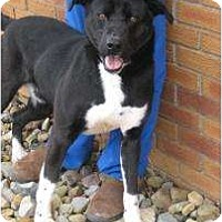 Adopt A Pet :: Seacrest - Salem, OH