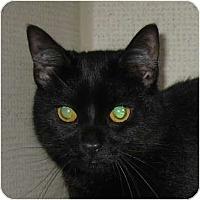 Adopt A Pet :: NOEL - Hamilton, NJ