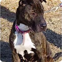 Adopt A Pet :: Zoe - Pascoag, RI