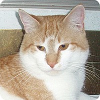 Adopt A Pet :: Smitty - Germansville, PA