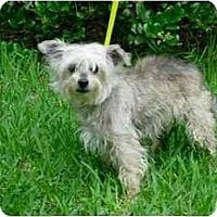 Adopt A Pet :: Jazzi Jane - Kingwood, TX