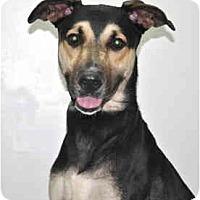 Adopt A Pet :: Montana - Port Washington, NY