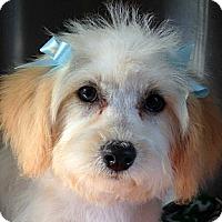 Adopt A Pet :: Louise - Tumwater, WA