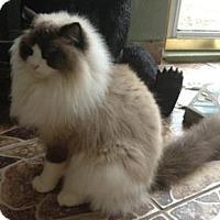 Adopt A Pet :: Walker - purebred - Ennis, TX
