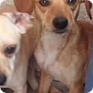 Adopt A Pet :: brandon