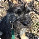 Adopt A Pet :: Dakota
