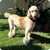 Adopt A Pet :: Mochi - Buena Park, CA