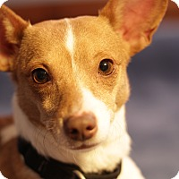 Adopt A Pet :: Bunny - Romeoville, IL